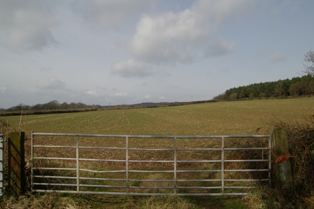 Field at TingTong, Woodbury Common