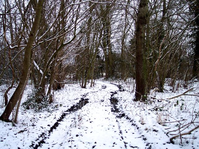 Mayalls Coppice in Mid March Snow