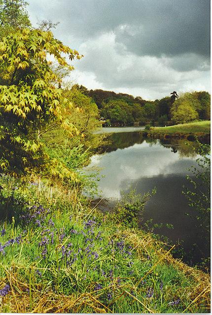 Rowe's Flashe, Winkworth Arboretum.