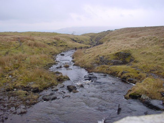 Mouse Gill Beck