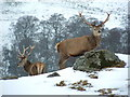 NN7652 : The Deer Park, Glengoulandie by Alan Stewart