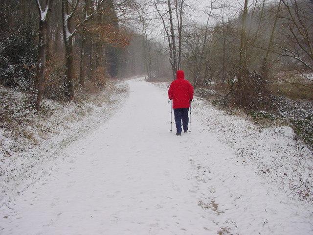 Snowy Track, Hood Hill Plantation