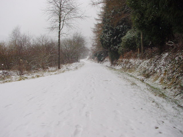 Forest Track in Winter