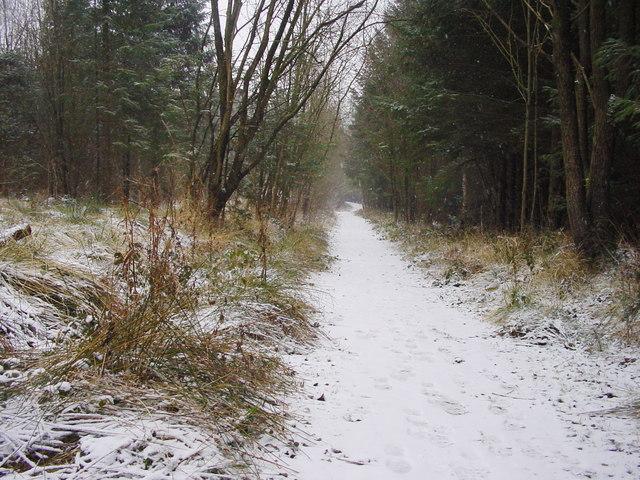 Bridleway, Hood Hill Plantation