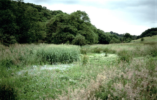 Water meadow by the Mouse Water