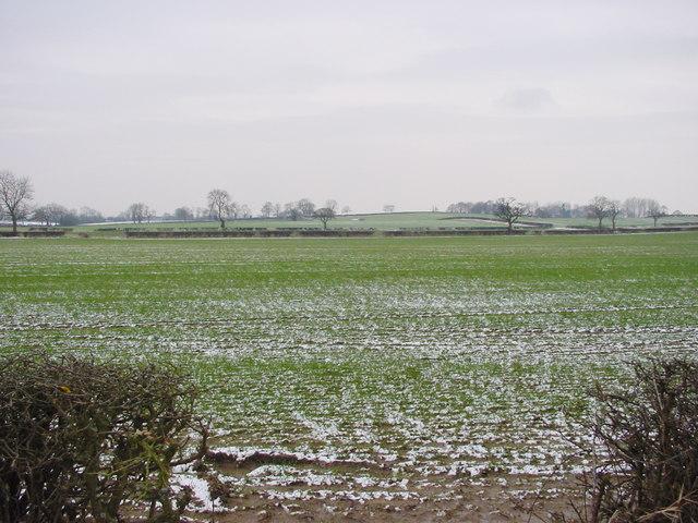 Balk Moor