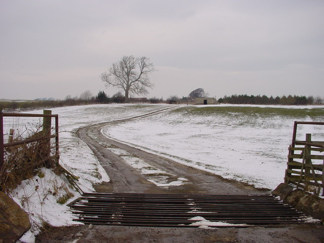 Cattle Grid and Track To Early Lodge
