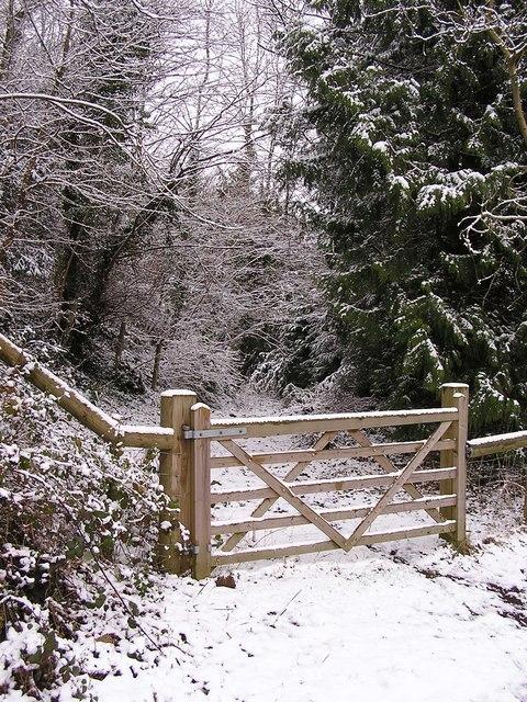 Track through the Snow