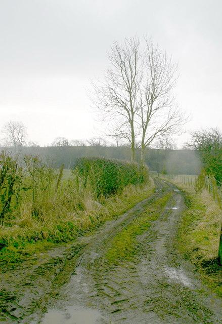 Footpath to Lowgill Farm