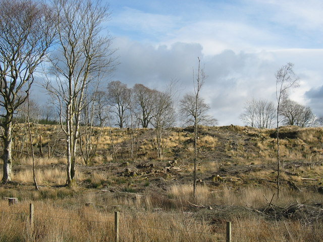 Trees by the A83 at Castleton.