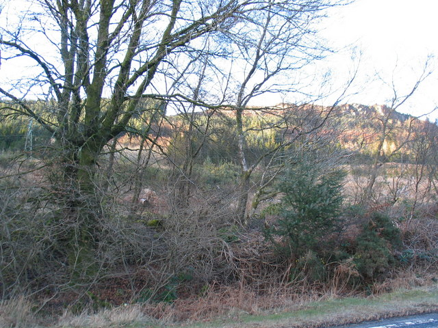 Roadside trees and shrub by Gortonronach.