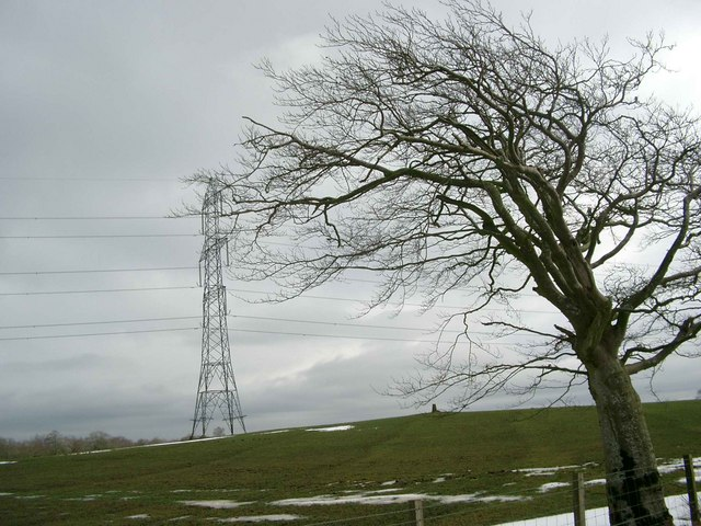 A Tree, a trig, a transmission line!