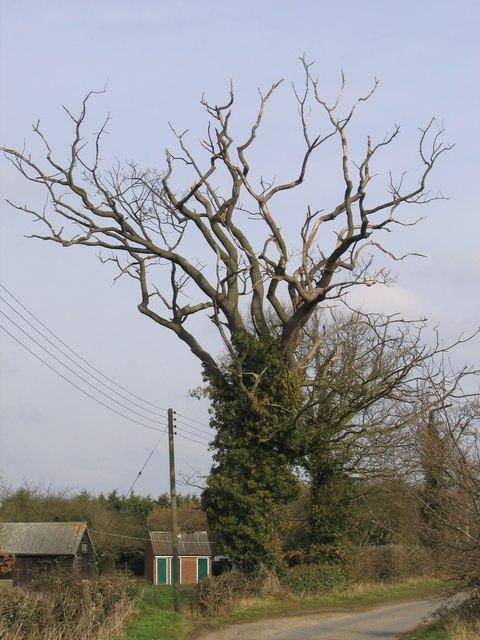 A Dead Tree, Bramerton