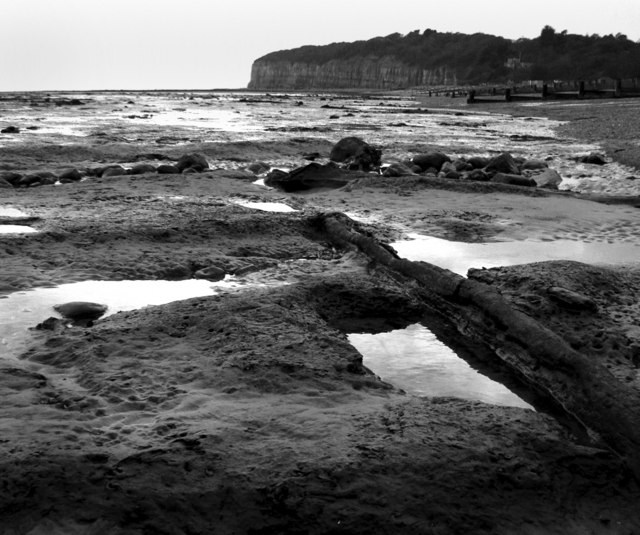 Winchelsea Beach, low tide. A sunken forest of petrified wood.