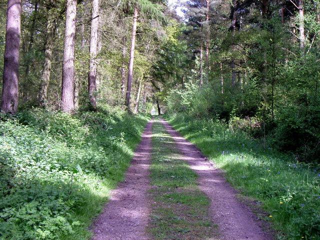 Scoreby Wood