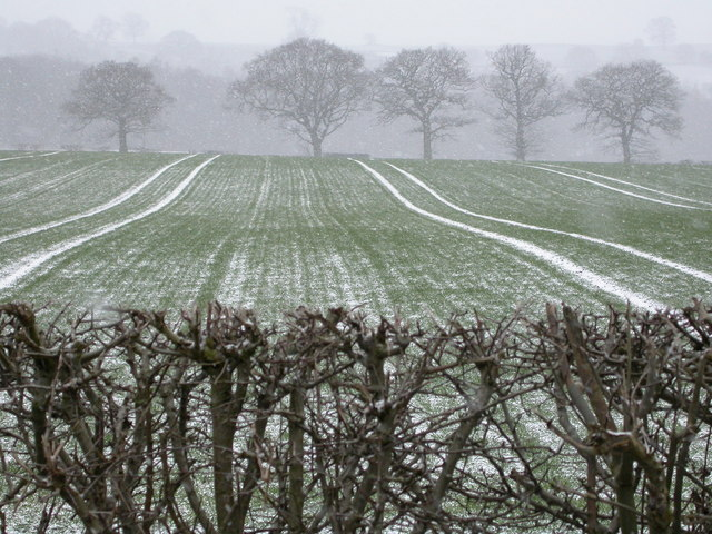 Snowy fields at Ingfield Farm