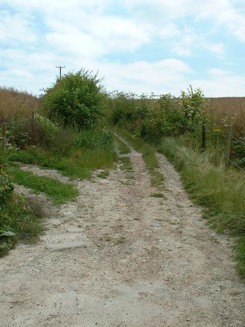 The Pilgrim's Way at Hollingbourne