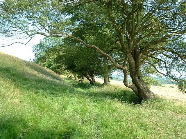 Grassy bridleway below Tolsford Hill