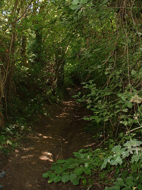 Overgrown bridleway between Tolsford Hill and the A20