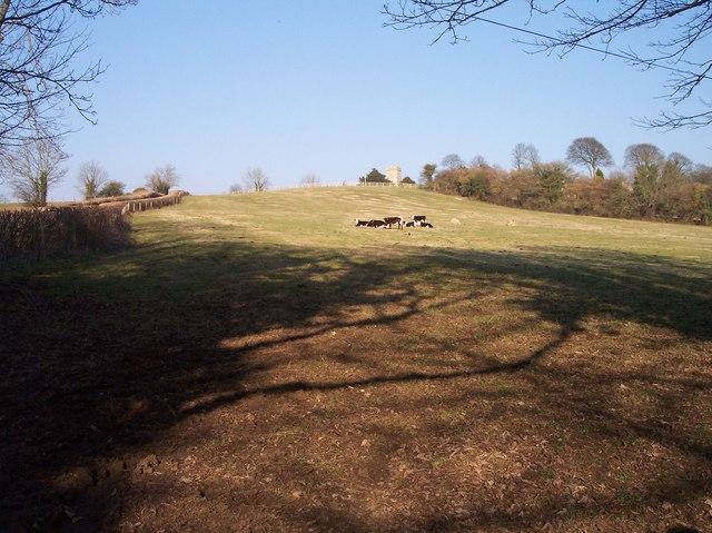 Pasture near Mann's Court