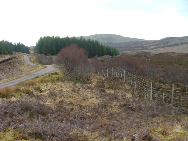 Trees Moorland and Road