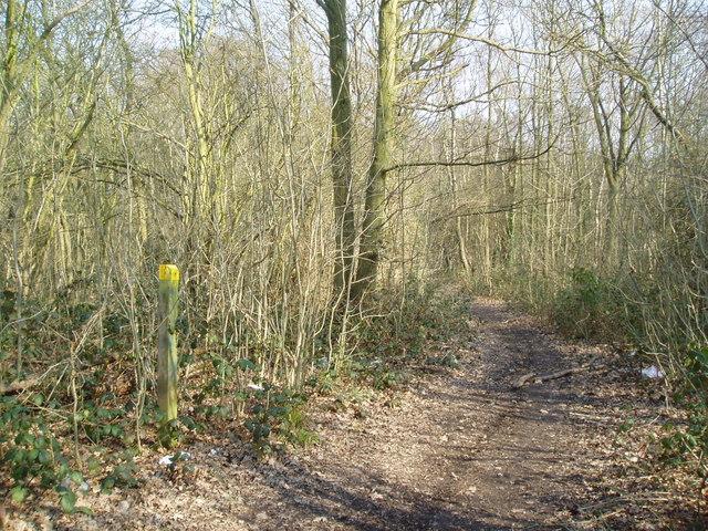 Sparrow Wood, Bromley, Kent