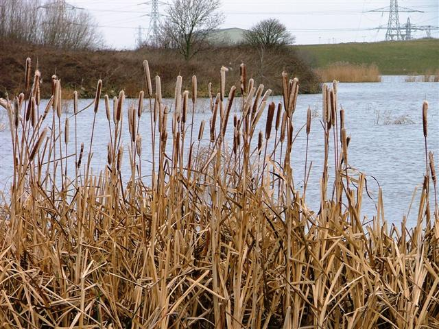 Haverton Hill Lake