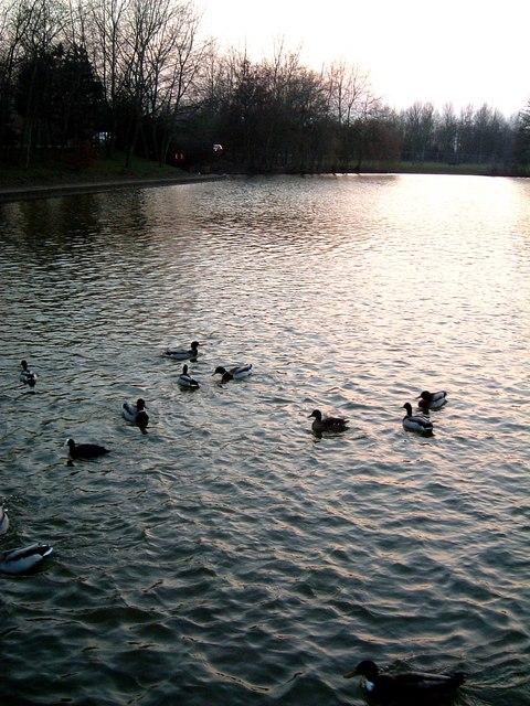 Lake with Ducks, evening. Watermead, Aylesbury