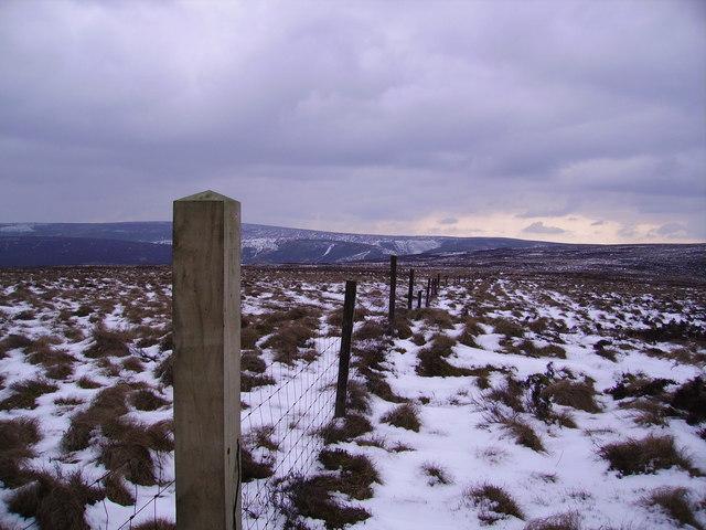 Fence Blaze Moss