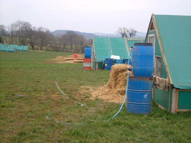 Poultry accommodation at Upton Pyne