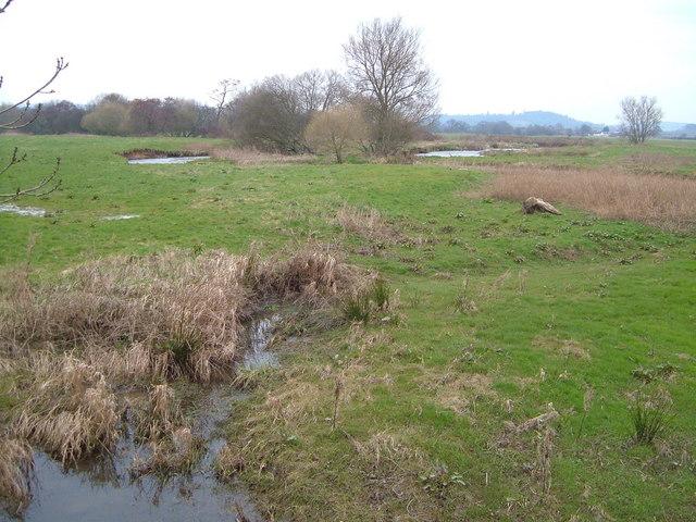 River Culm water meadows