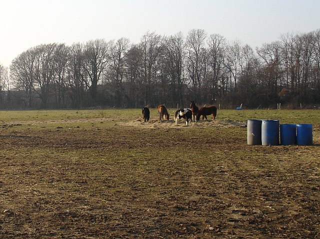 Ponies by the A278