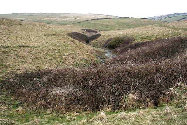 Stream in open grassland