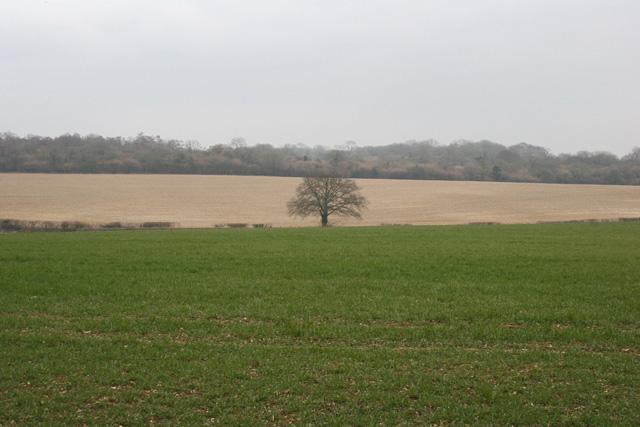 Farm land north of Whiteparish