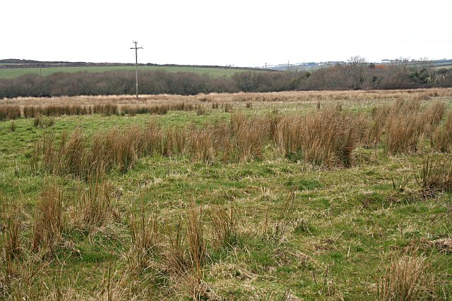 Boggy Ground at Crantock Plains