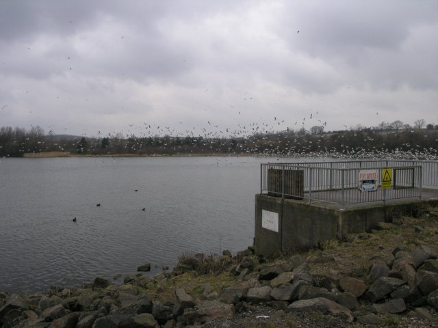 Fishing Platform and Gulls