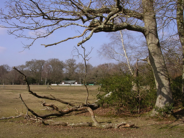 Bartley cricket field from the wood's edge, New Forest