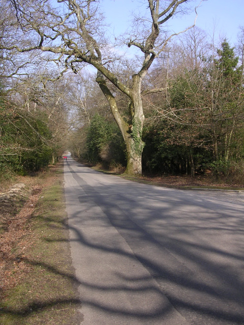 Beechwood Road at Beechwood House, New Forest