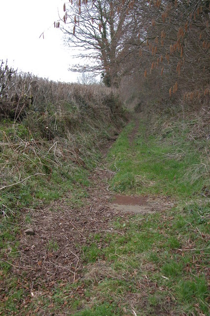 Green lane at Linkshill