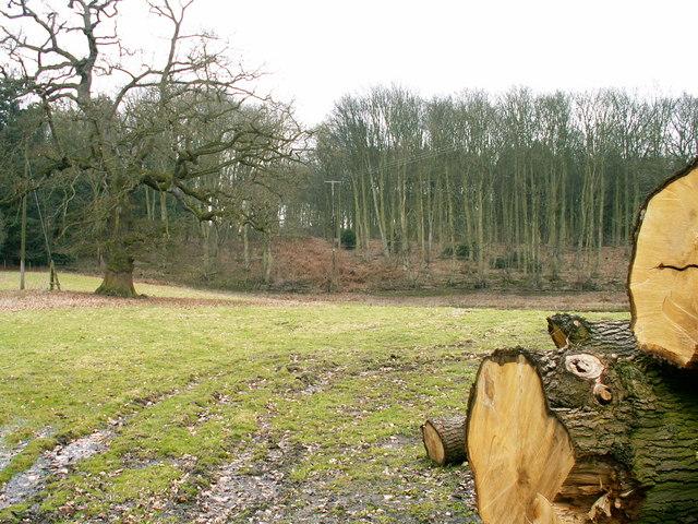 Alkmund Wood