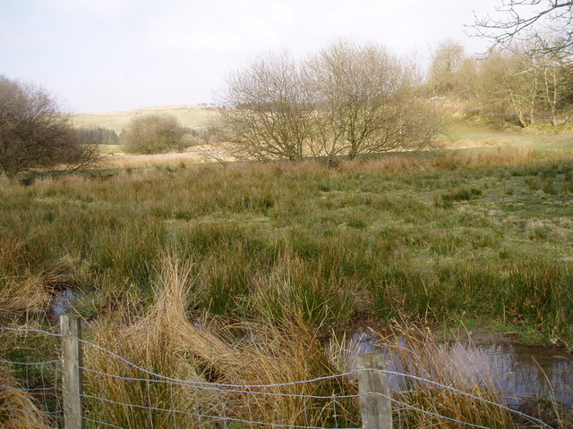 Marshland near Tan-y-Graig