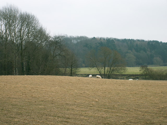 Towards Cutbury Wood