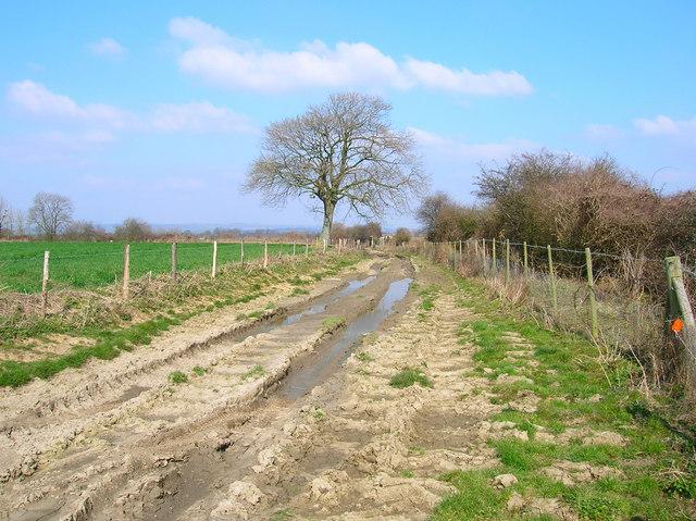 Rutted track near Lidsey Lodge Farm