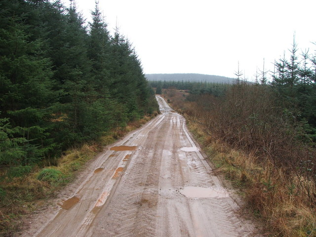 Forestry track, North Kintyre.