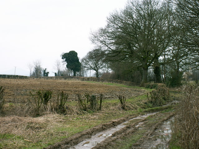 Farmland at Bicton