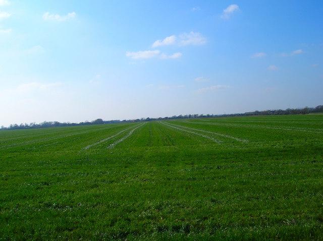 Field near Colworth