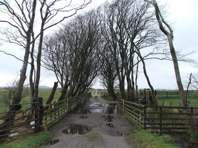 Farm track at Ballure.