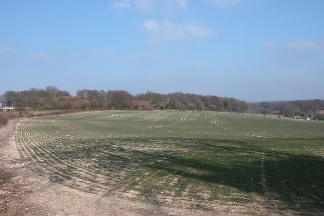 Farmland beside the South Downs Way