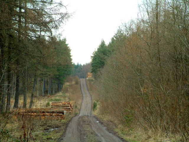 Forest track through Strelitz wood