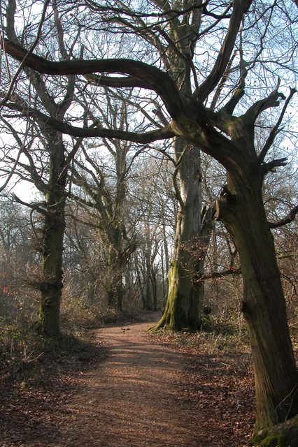 Bridleway through woodland.